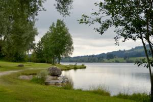 Pond restoration