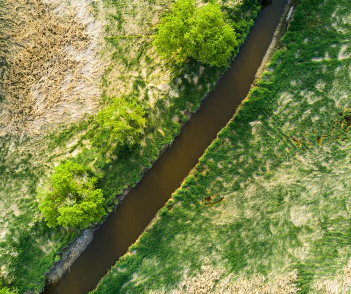 Wetland mitigation