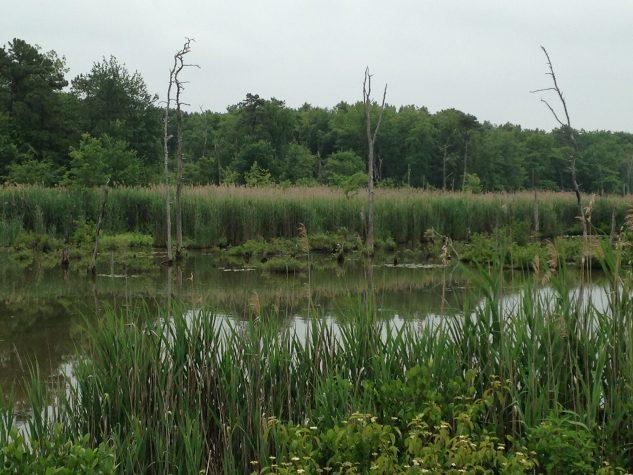Habitat restoration 1
