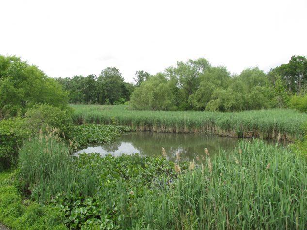 stream restoration planting