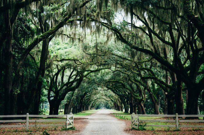 urban tree canopy