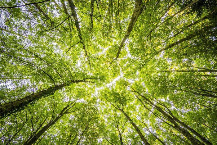 upland forest restoration